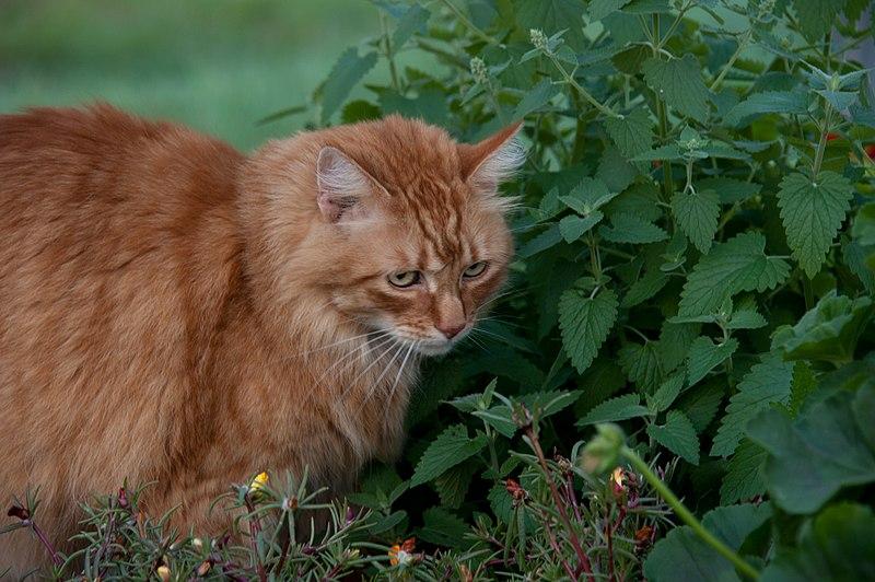 Catnip On Cats Food
