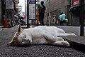 Ginza 銀座七丁目 - panoramio.jpg