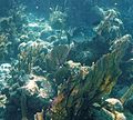 Glover's Reef 2-15 (33177401052).jpg