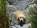 Golden Retriever in the water.jpg