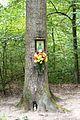 Goluchow, Forest Culture Trail (2).JPG