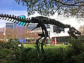 Google Mountain View campus dinosaur skeleton 'Stan'.jpg