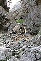Gordale Scar - geograph.org.uk - 616394.jpg