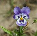 "Gradina Botanica ""Vasile Fati"" (4653996888).jpg"