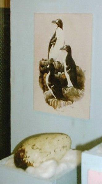 Ipswich Museum - Egg of great auk, Ipswich Museum, England