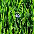 Green^blue - Flickr - Stiller Beobachter.jpg