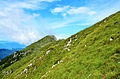 Green Meadows Panorama.jpg