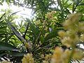 Green beauty 2015 in kerala 158.jpg