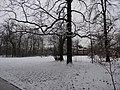 Großer Garten, Dresden in winter (1091).jpg