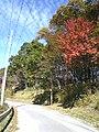 Gunma Prefectural Road 46 2.JPG