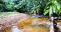 Guyana Rainforest Stream - panoramio.jpg