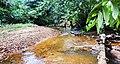 Guyana Rainforest Stream - panoramio.jpg