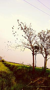 Gwalior nature.jpg
