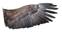 Bird feet and legs  Wikipedia