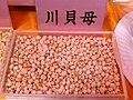 HK SW CMMA 香港中藥聯商會 Chinese Medicine Merchants Association - 川貝母 Fritillaria cirrhosa Jan-2014.JPG