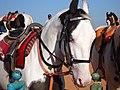 Handsome Horse.jpg
