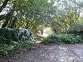Harewood Road - Overgrown Footpath Entrance - geograph.org.uk - 586830.jpg
