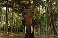 Havelock elephant.jpg
