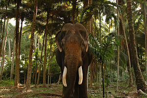Havelock Island Elephant Beach