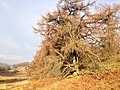 Hawkshead, UK - panoramio (3).jpg