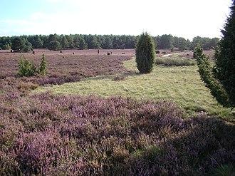 Faßberg - Image: Heidefläche