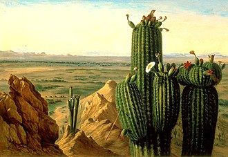 Gila Bend Mountains - Image: Henry Cheever Pratt View from Maricopa Mountain near the Rio Gila 1855