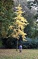 Herbstbaum (50230210).jpeg