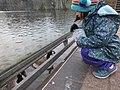 Highfields feeding the Canada Geese 9885.JPG