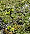 Highland Plants (38120921221).jpg