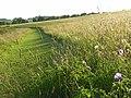 Hillside, Whatcombe - geograph.org.uk - 876155.jpg