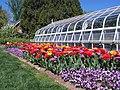Hillwood Gardens in April (17410187580).jpg