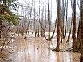 Hochwasser, Auwald, Sinn, Rhön.jpg