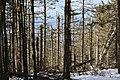 Hornisgrinde 2020-03-14 02.jpg