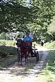 Horse-drawn carriages in Bratley Wood - geograph.org.uk - 41363.jpg