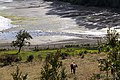 Horse at the beach of Chiloe island - panoramio.jpg