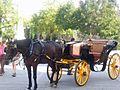 Horse drawn carriages001.jpg