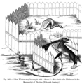 How Wolves may be caught with a Snare Fac simile of a Miniature in the Manuscript of Phoebus Fifteenth Century.png