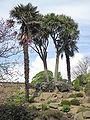 Howard Davis Park palms Jersey.jpg