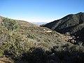 Hualapai Mountains (12890729344).jpg
