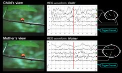 Plik:Hyperscanning-MEG-for-understanding-mother-child-cerebral-interactions-Movie1.ogv