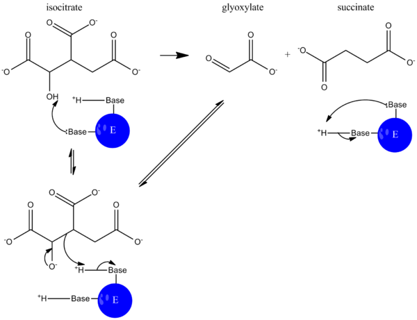 ICL-catalyzed reaction