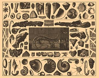 Encyclopedic dictionary - Illustration of fossils from Brockhaus and Efron's Encyclopedic Dictionary (1890—1907)
