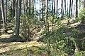 Ierakumi, Babītes pagasts, Babītes novads, Latvia - panoramio.jpg