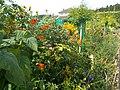 Il giardino della casa di Monet - panoramio (2).jpg