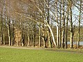 In Colwick Country Park - geograph.org.uk - 651546.jpg