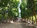 Inarihan Farm Resort 10.jpg