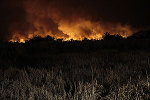 Costanera Sur Ecological Reserve - Wildfire in the reserve on July 2013.
