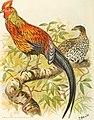 Indian sporting birds (1915) (14750304252).jpg