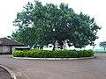 Itaguajé . municipio de Jesuitas . Paraná, Brasil . 144 - panoramio.jpg
