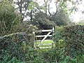 Ivy, Gate And Wood - geograph.org.uk - 265891.jpg